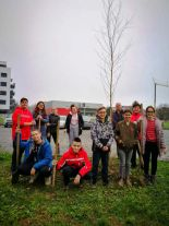Zasadi drvo_3