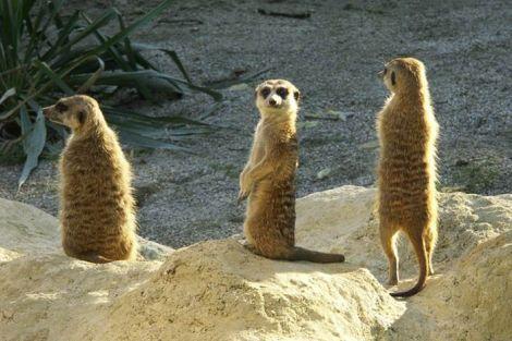 petasi zoo_2013
